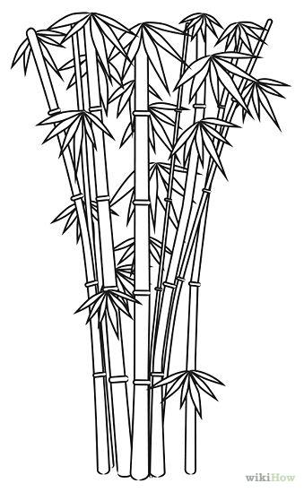 Bamboo Tree Pencil Drawing Wwwimgarcadecom Online
