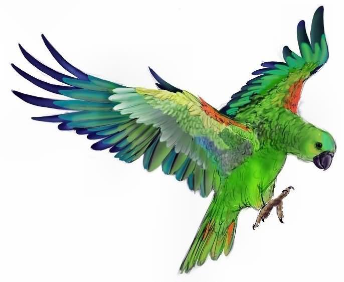 New Zealand parrot  Wikipedia